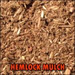 hemlock_mulch_img